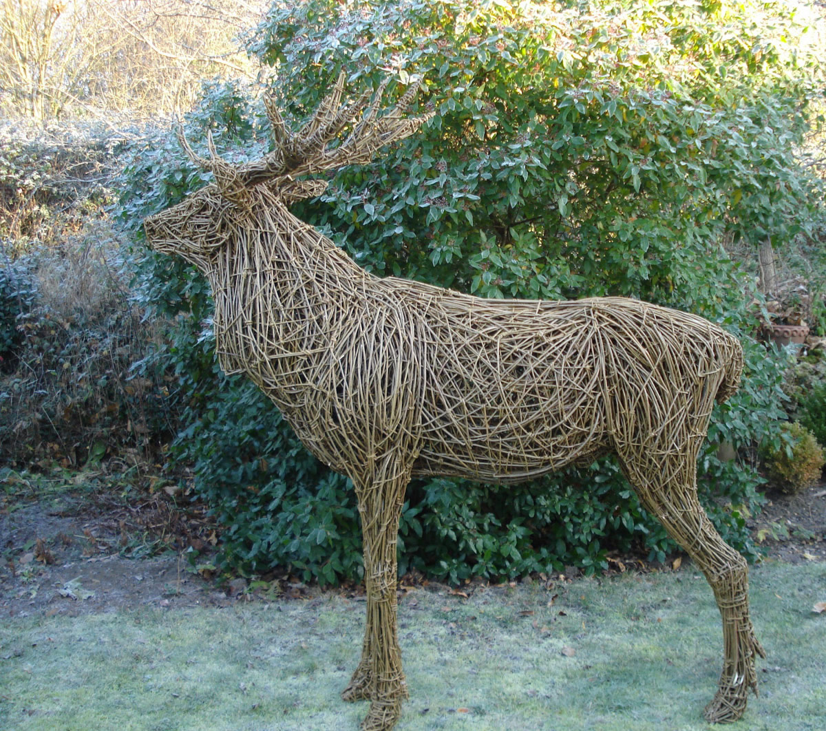 Red Deer Stag, life size, willow/steel.